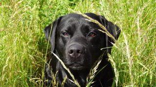 Vores hund Charlie
